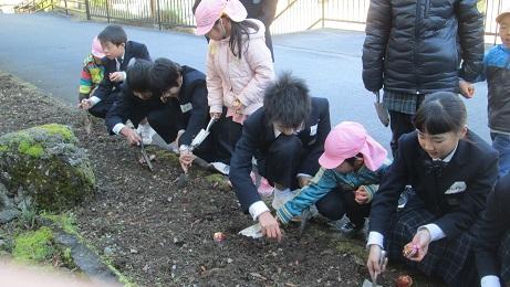 子ども園の年長さんが梼原学園にチューリップを植えに来ました!!